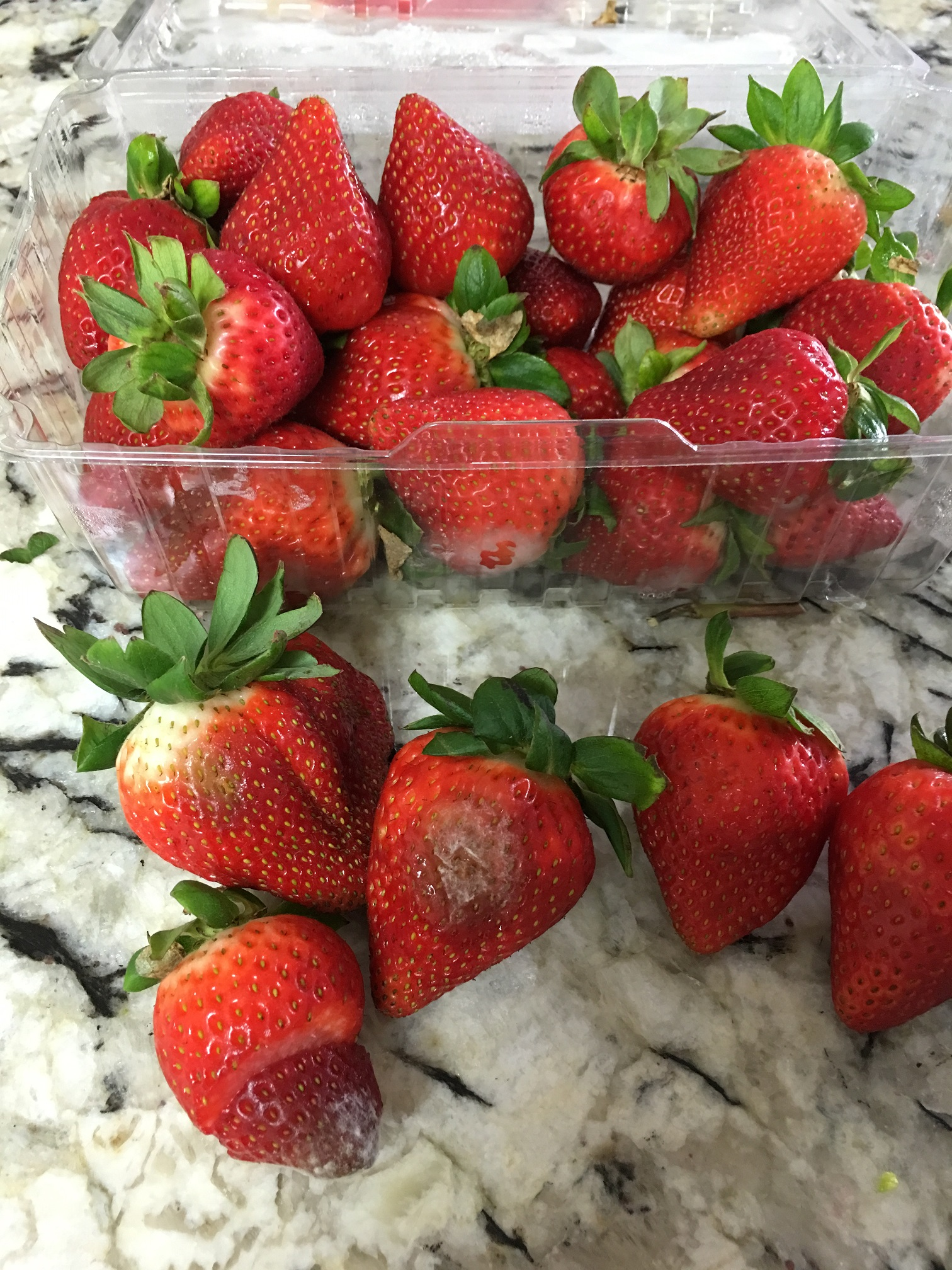 costco customer service complaints department hissingkitty com costco sunnyvale costco store ca 94086 one the boxes had rotten strawberries fungus on them our membership number is 111845756733