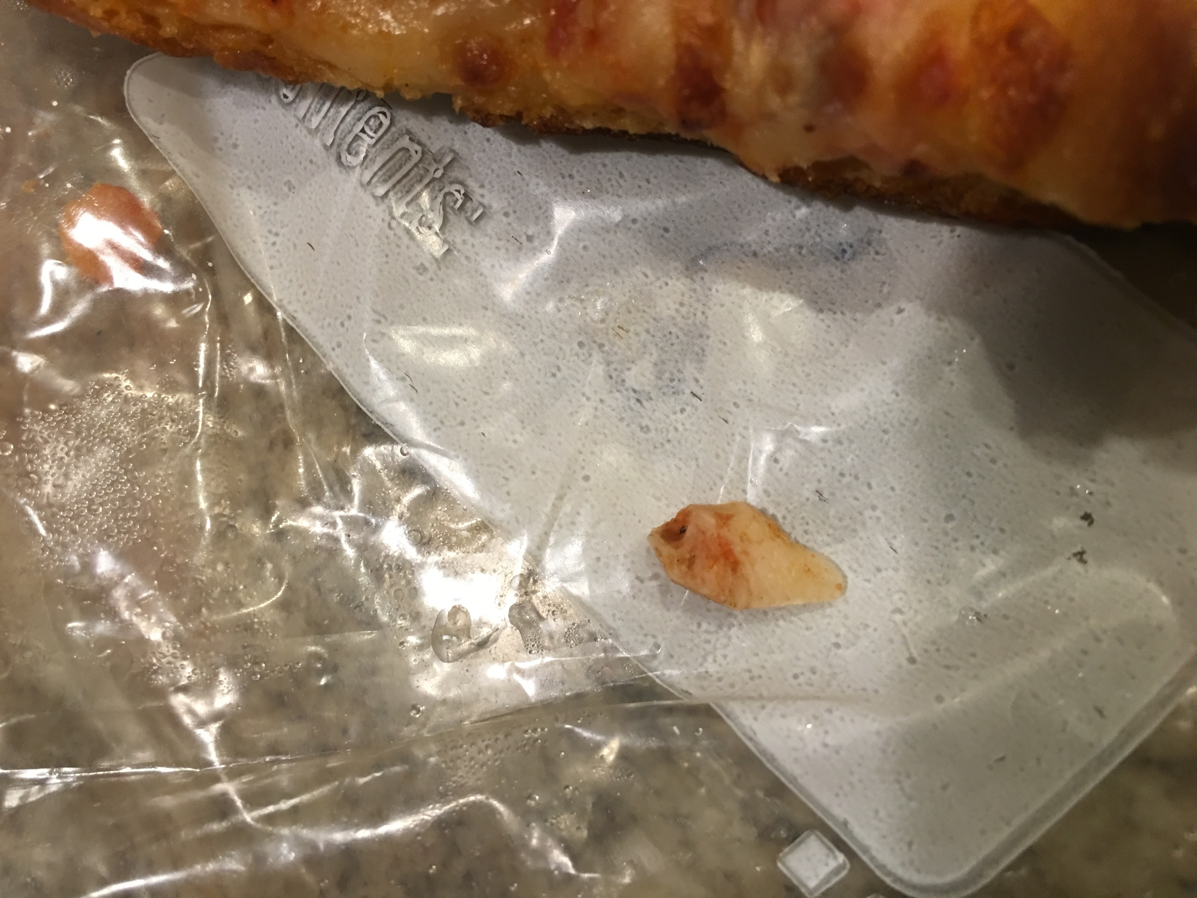 papa john s customer service complaints department hissingkitty com chewing my pizza and this is what was in it thought i was going to be sick looks like a tooth but can t be sure it s gross no matter what it is